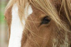 Cheval avec un beau plan rapproché de crinière Images libres de droits