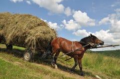 Cheval avec un foin chargé par chariot. Photo stock