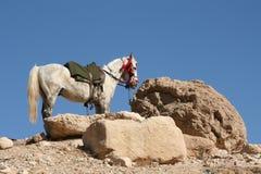 Cheval blanc à côté des roches Photographie stock libre de droits