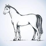 Cheval blanc élégant Retrait de vecteur illustration de vecteur