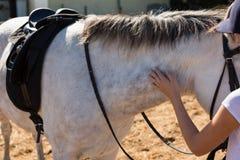 Cheval blanc émouvant de fille dans le ranch Images stock