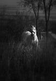 Cheval blanc Photos libres de droits