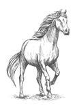 Cheval blanc avec le portrait de sabot de frapper du pied Photographie stock libre de droits