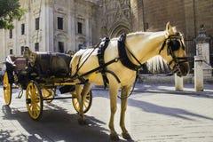 Cheval blanc avec un chariot pour des passagers au centre historique de la ville photo libre de droits