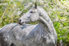 Cheval blanc dans la fleur photographie stock libre de droits