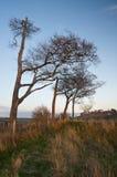 Cheval blanc de craie antique dans le paysage à l'anglais de Cherhill WILTSHIRE Images stock