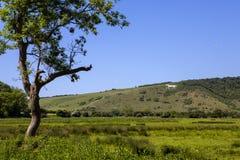 Cheval blanc de Litlington photo libre de droits