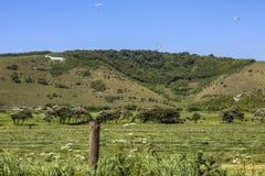 Cheval blanc de Litlington photos stock