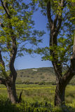 Cheval blanc de Litlington images libres de droits