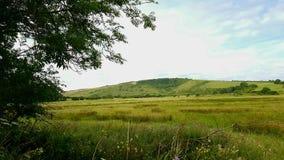 Cheval blanc de villagede Litlingtondans l'inle Sussexest,Angleterre, de vallée de Cuckmerede the photos libres de droits