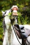 Cheval blanc mâchant l'herbe Image libre de droits