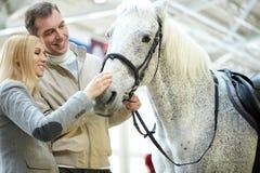 Cheval blanc mignon images libres de droits