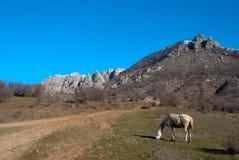 Cheval blanc près d'une route de campagne en bas de moun Images stock