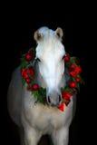 Cheval blanc sur le noir photo libre de droits