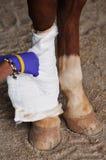Cheval blessé Photo libre de droits