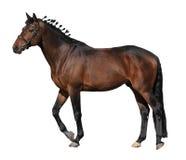 cheval brun photo libre de droits