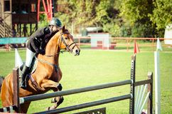 Cheval brun et saut de tour de jockey de jeune homme beau au-dessus de la fourche en plan rapproché de sport équestre Photo stock