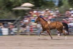Cheval courant Images libres de droits