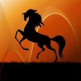 Cheval courant sur la silhouette d'herbe Images stock