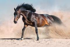 Cheval couru en poussière Image libre de droits