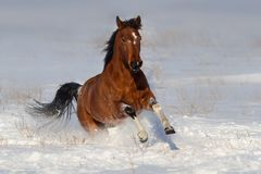 Cheval couru rapidement dans la neige images libres de droits