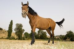 Cheval curieux Photos stock