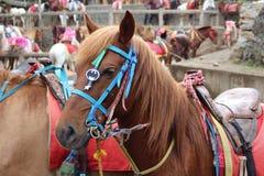 Cheval décoré au festival Philippines de ville de Baguio Image libre de droits