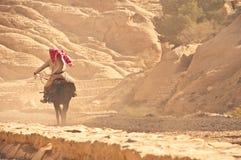 Cheval d'équitation arabe Image stock