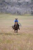 Cheval d'équitation d'homme à la vitesse Photo stock