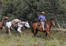 Cheval d'équitation d'homme Image libre de droits