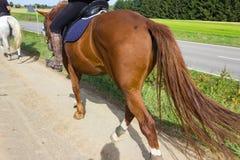 cheval d'équitation de deux dames un jour ensoleillé de septembre Photographie stock