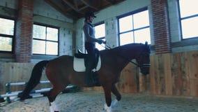 Cheval d'équitation de femme sur le champ de courses couvert banque de vidéos
