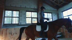 Cheval d'équitation de femme sur le champ de courses couvert clips vidéos