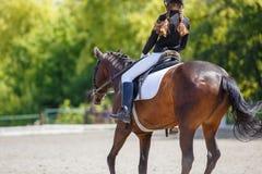 Cheval d'équitation de jeune fille sur la concurrence équestre photo libre de droits