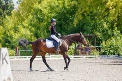 Cheval d'équitation de jeune fille sur la concurrence équestre photographie stock