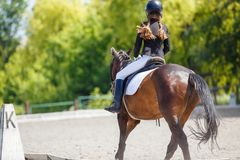 Cheval d'équitation de jeune fille sur la concurrence équestre image libre de droits