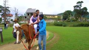 Cheval d'équitation heureux de touristes, Sri Lanka - 10 février 2017 banque de vidéos
