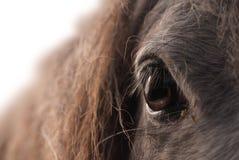 Cheval d'oeil Photographie stock libre de droits