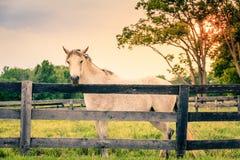Cheval d'une ferme Photo libre de droits