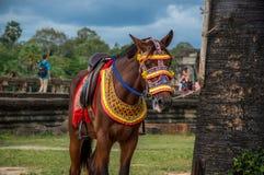 Cheval dans Angkor Vat, Cambodge Photos stock