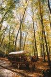 Cheval dans Autumn Mountains image libre de droits