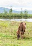 Cheval dans l'action photographie stock libre de droits