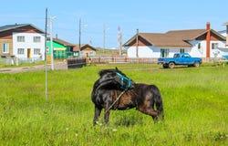 Cheval dans l'arrière-cour ! Images libres de droits