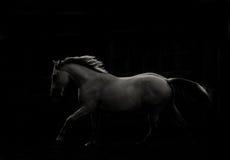 Cheval dans l'obscurité Photo stock