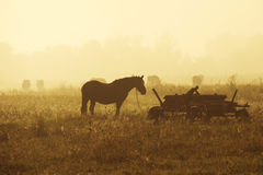 Cheval dans la brume Photo libre de droits