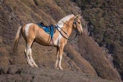 Cheval dans la colline Photos stock