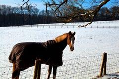 Cheval dans la couverture chaude sur le pâturage de l'hiver Photographie stock libre de droits