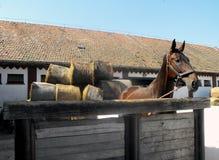 Cheval dans la ferme. Photo stock