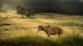 Cheval dans la ferme Photo libre de droits