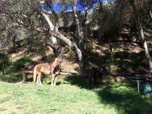 Cheval dans la forêt Images libres de droits
